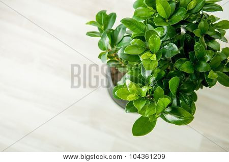 fresh green plant closeup indoore background