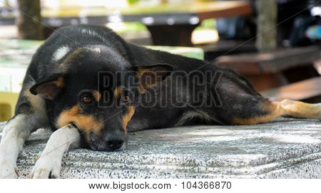 Black Dog Laying Down On Granite Chair