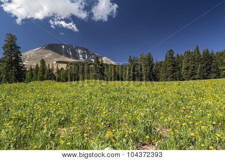 Meadow and Mount Peale in Utah