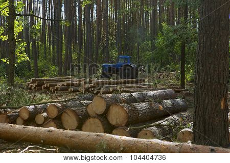 Felling Of The Forest