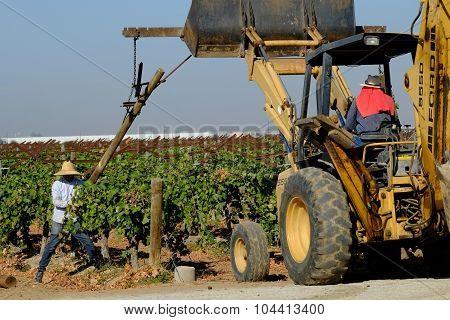 Demolishing Old Vineyard