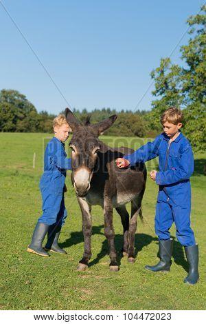 Farm boy currying the donkey