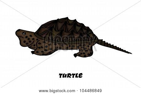 Colorful insulated kaimanawa turtle for your design. Vector illustration