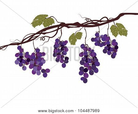 Stylized Graphic Image Of A Vine With Grapes