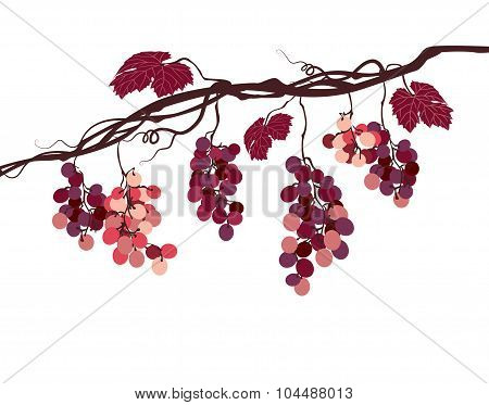 Stylized Graphic Image Of A Vine With Pink Grapes
