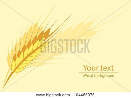 Background For A Label Or A Poster With A Picture Of Wheat Ears
