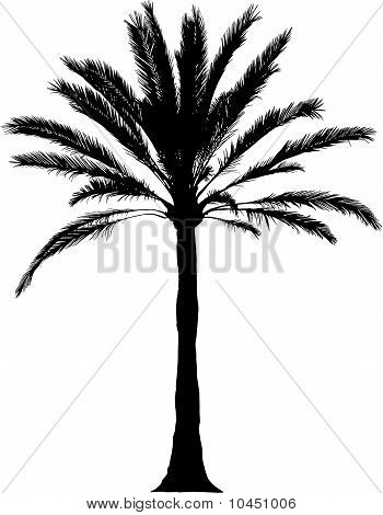 Detailed palm Illustration