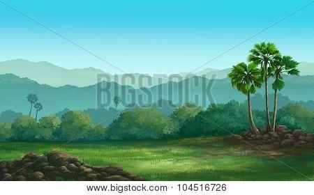View Palmyra Palm
