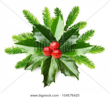 Pine tree branch and Holly berry leaves. Christmas decoration isolated on white background.