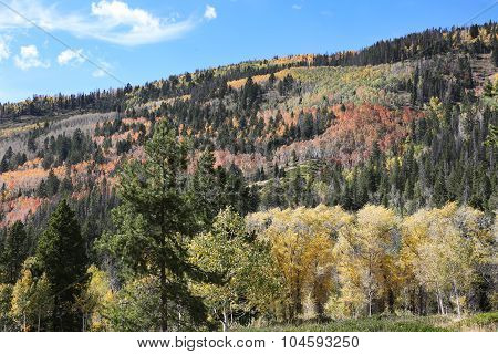 Colorful Autumn Mountain Side Forest