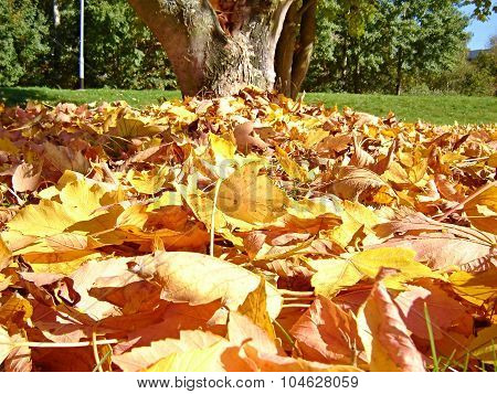 Stack Of Dry Leaves Under The Tree