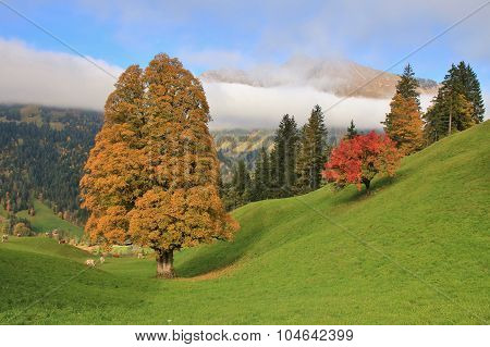 Autumn Scene Near Gstaad