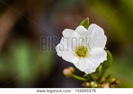 White single flowers with green bokeh background