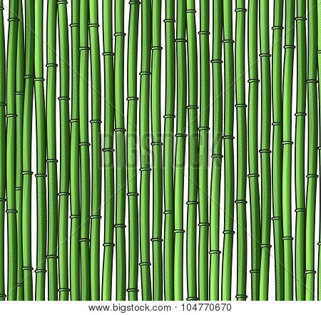 Background with a bamboo. Bamboo branches, stalks