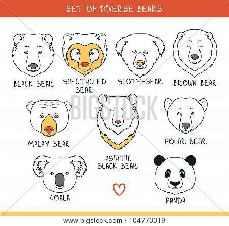 Set 9 muzzles bears handmade in linear style. Bear faces
