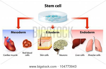 Stem Cell Application