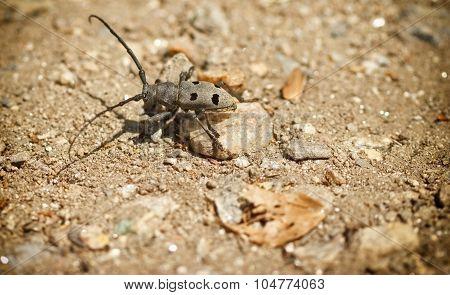 Bug beetle on sandy ground