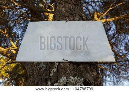 Sign On Tree