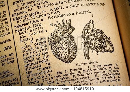 Illustration And Definition Of The Word Hearth.