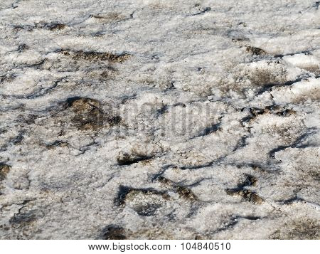 Petrified Salt Is Produced In The Dry Natural Estuary In The Evening Light Of The Setting Sun, Selec