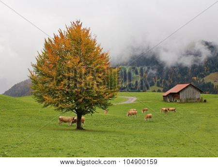 Idyllic Autumn Scene In Gstaad, Swiss Alps