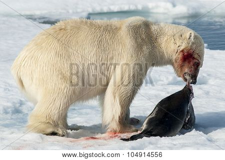 Lunch for Polar Bear