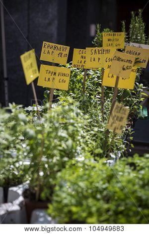 fresh aromatical herbs in pots on the market