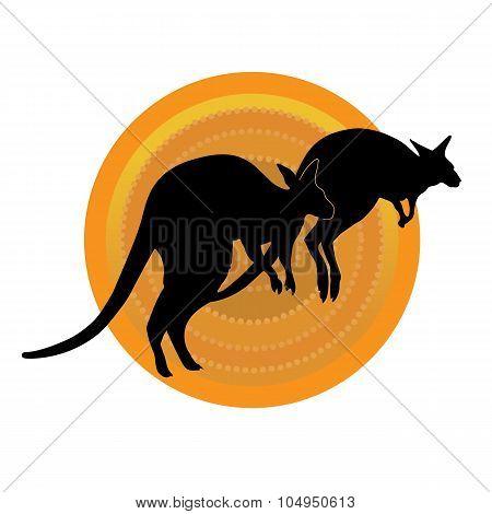 Kangaroos Running