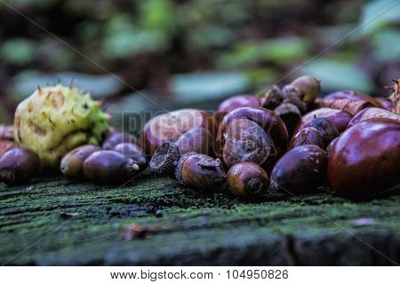 Chestnuts, Buckeye And Acorns On Wooden Table. Autumnal Decoration
