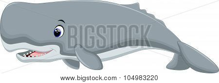 Cute whale cartoon