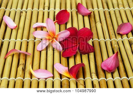 Tropical Plumeria On Bamboo For Spa And Wellness Concept