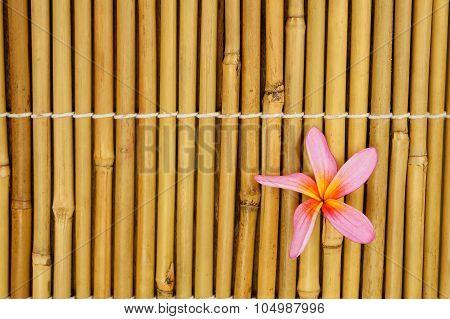 Tropical Pink Frangipani On Bamboo