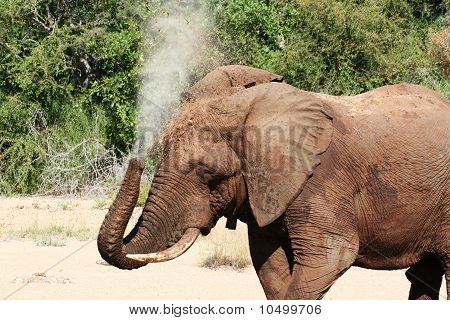 poster of An elephant in a riverbed bathing by spraying water on himself.
