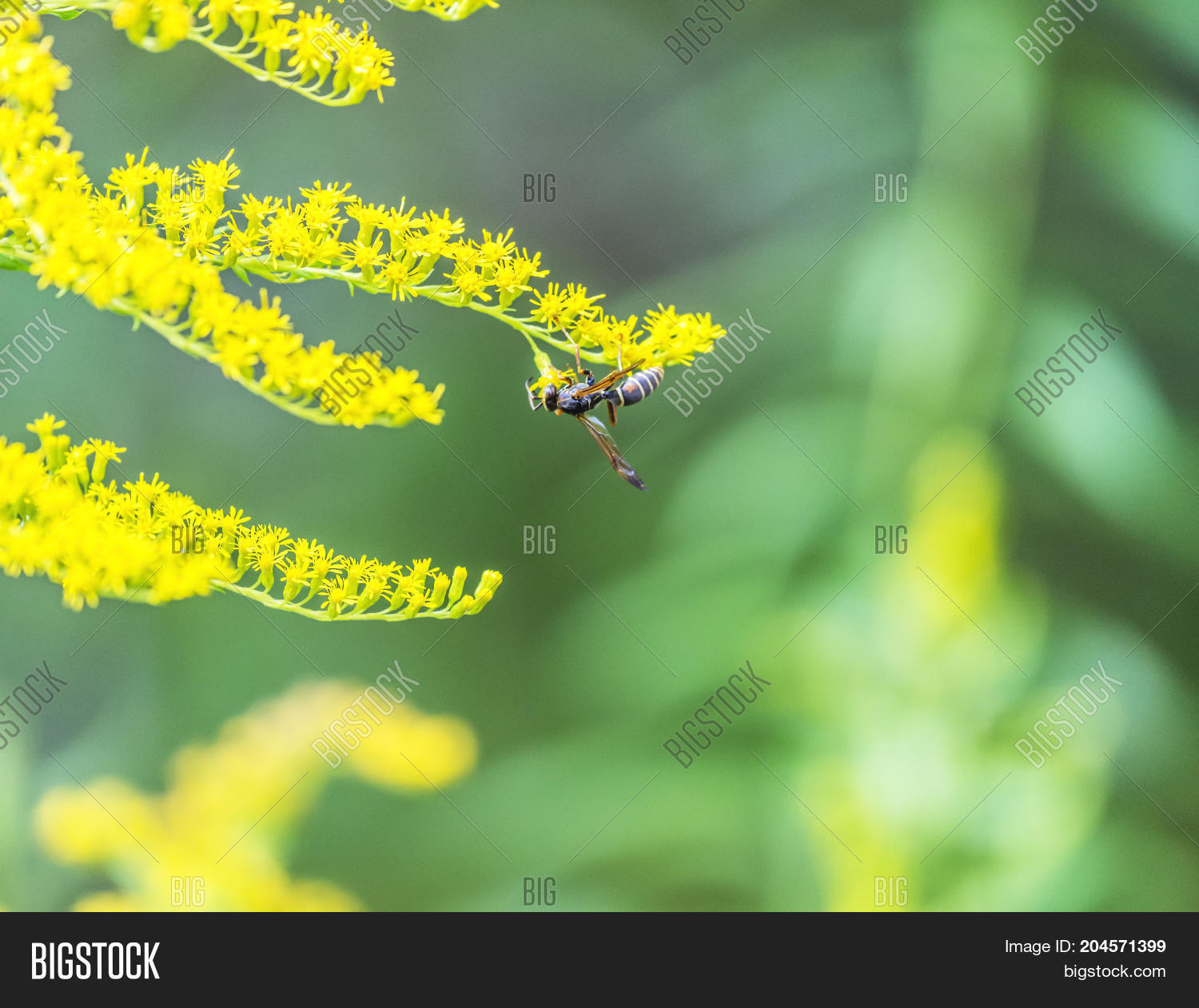 Hornet Bee Perched On Image Photo Free Trial Bigstock