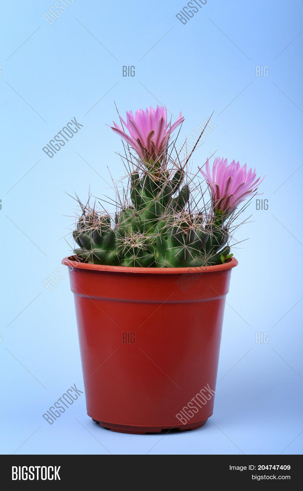 Lovely Plant Indoor Image Photo Free Trial Bigstock
