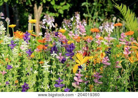 Multicolored garden flowers. Beautiful delicate floral background