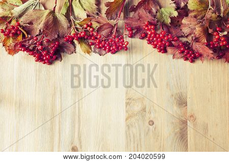 Autumn background with seasonal autumn nature berries of Viburnum opulus or guelder rose on the wooden background. Autumn background with free space for text. Bright autumn berries of viburnum, autumn still life. Autumn nature