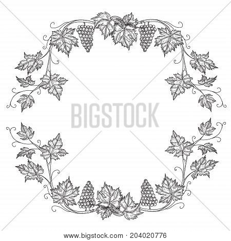Hand drawn set vector illustration of branch grapes. Vine sketch isolated on white background.