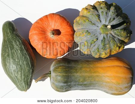 Squash and pumpkins on the white background. Top view.