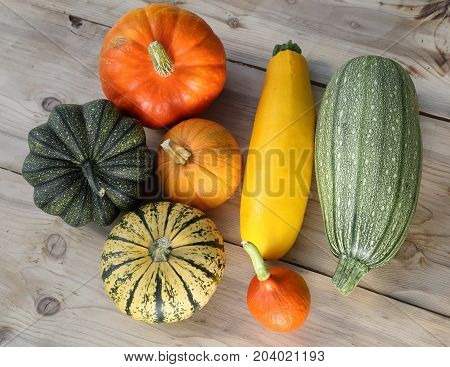 Autumn harvest colorful squashes and pumpkins on wooden background.