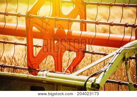Combine harvester revolving reel harvesting wheat crops in cultivated agricultural field