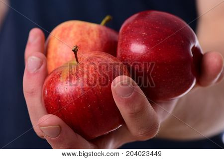 Male Hands Hold Red Apples. Apples In Fresh Juicy Color