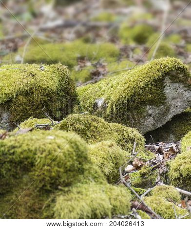 low angle shot of some mossy overgrown stones