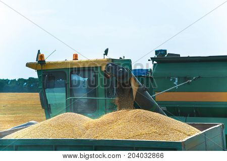 Combine harvester in action on the wheat field, unloading grains in the body