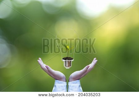 Hand holding on light bulb with green plant inside for saving earth nature green background. Idea environmental conservation Concept