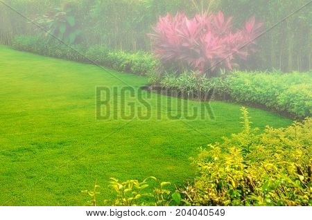 andscaped front yard with a garden design and morning fog into the front lawn.