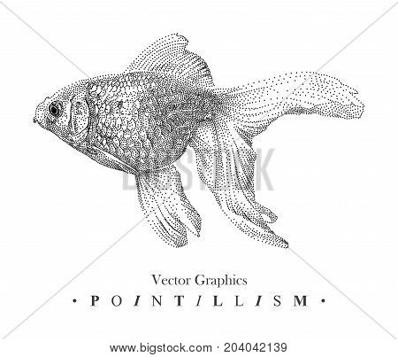 Vector illustration with goldfish drawn by hand. Graphic drawing pointillism technique. Underwater world. Black and white animal element isolated on white