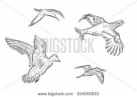 set of vector wildfowl isolated on white background