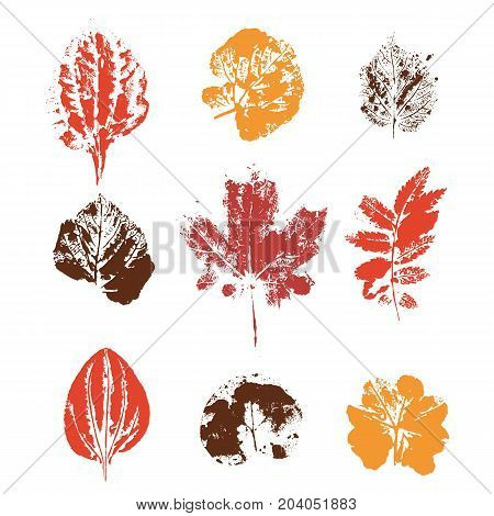 Color Set with hand made ink stamp leaves. Objects isolated on white. Black and white leaf blots. Monochrome artistic floral collection. Hi detailed texture of forest leaves