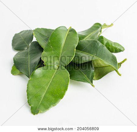 fresh Kaffir lime leaves on white background